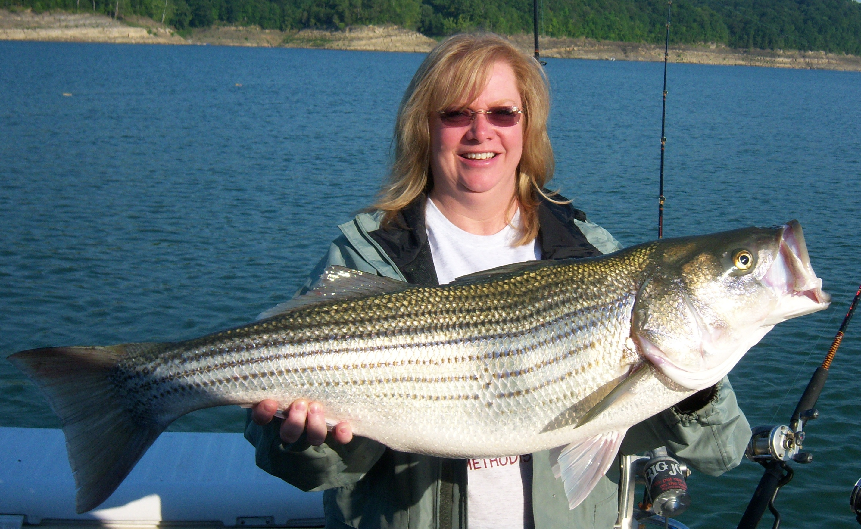 Morgan 39 s guide service inc trophy striper fishing on for Striper fishing lake cumberland